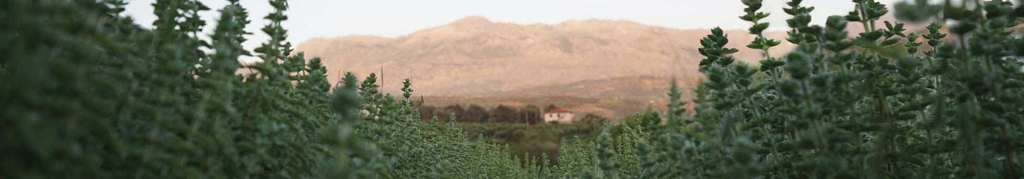 αγρόκτημα Iliostasio